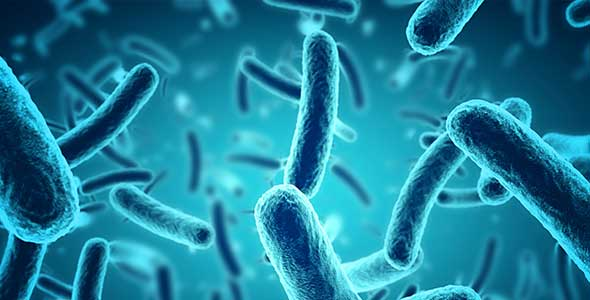 Unusual Case Of Newborn With Salmonella Revealed With Rapid Diagnostics Biomerieux Connection
